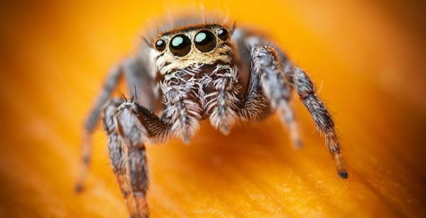 آراکنوفوبیا یا عنکبوت هراسی (Arachnophobia)