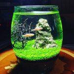 آموزش کاشت سبزه در تنگ ماهی مناسب عید نوروز