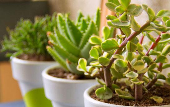 بهترین نکات برای نگهداری گل ها و گیاهان خانگی