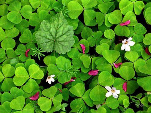 روانشناسی رنگ سبز و خصوصیات افراد علاقه مند به آن