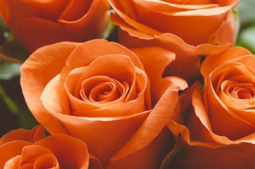 روانشناسی رنگ نارنجی و خصوصیات افراد علاقه مند به آن