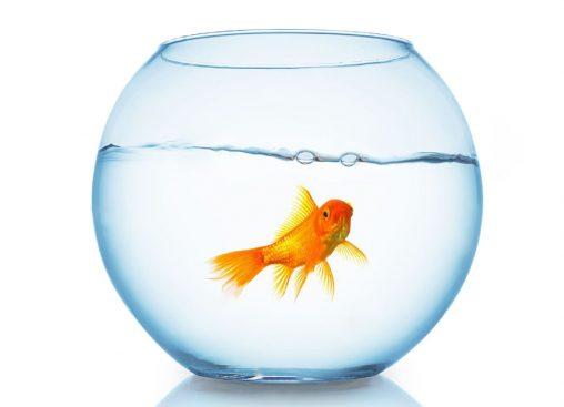 زیبا ترین تزیین تنگ ماهی برای سفره ی هفت سین نوروز98
