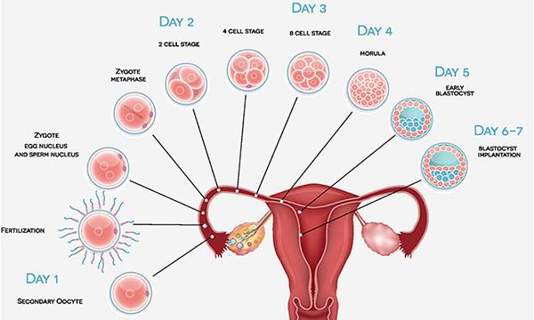 مدت-زمان-لکه-بینی-در-اوایل-20-هفته-اول-بارداری