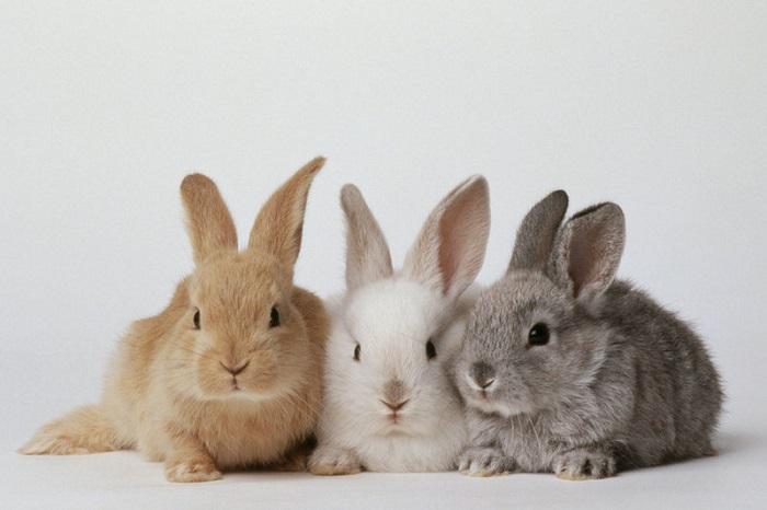 مشخصات کلی متولدین سال خرگوش (گربه)