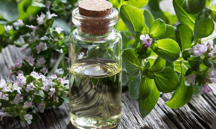 فواید دارویی و درمانی پونه برای بدن